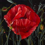 Island Poppy – Mary Louis Parkes
