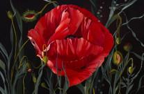 Island Poppy – Mary Louis Parkes