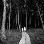 In The Company of Trees – Paige McFall